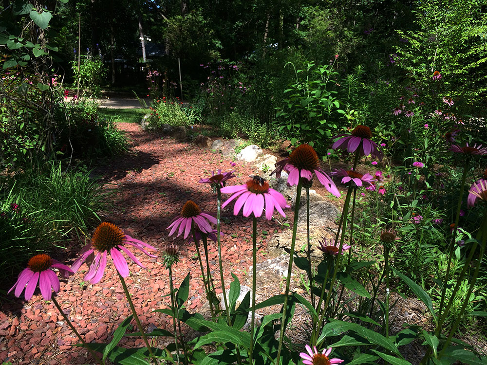 five essential perennials for florida gardens - Florida Butterfly Garden