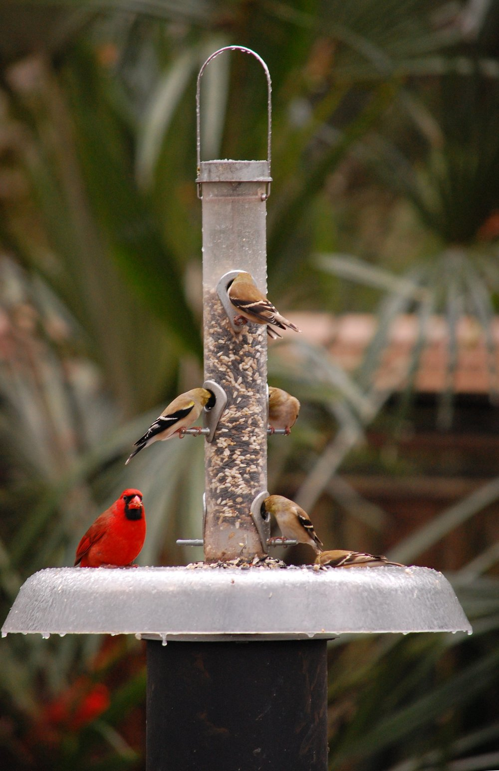 Squirrel-proof Feeders for your Back Yard Birding Valentine