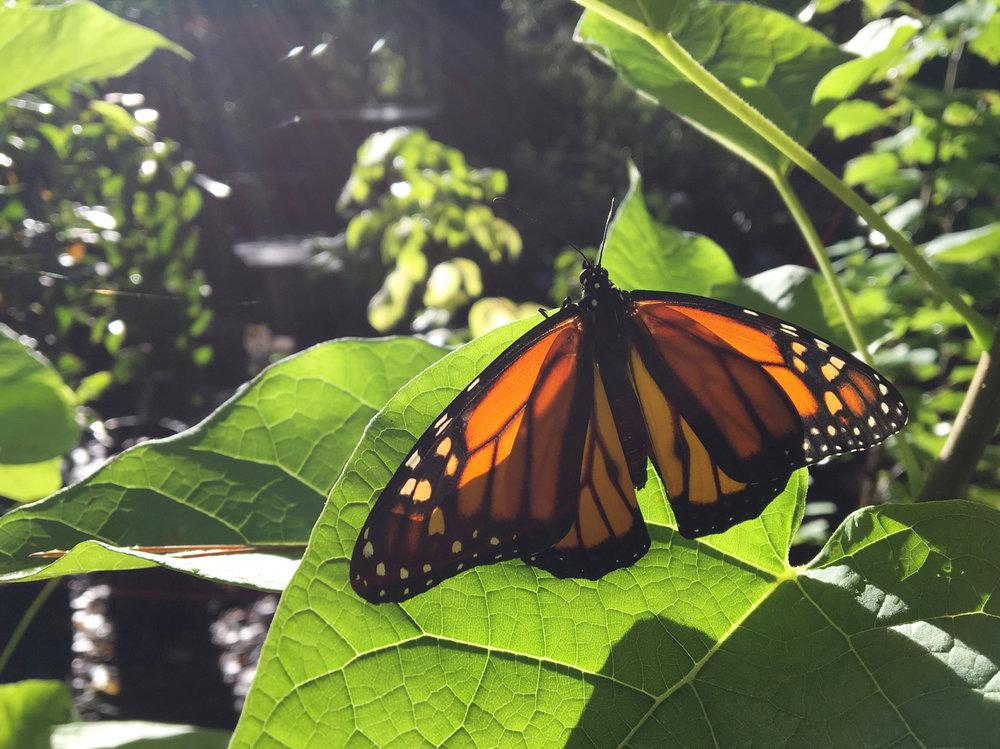 Butterfly Gardens -