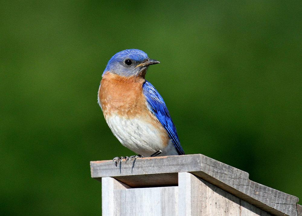 Wild bird store -