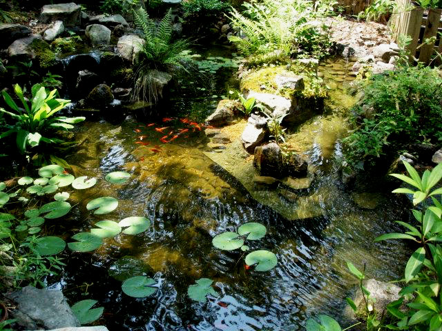 This garden pond, planted with all native plants, provides habitat for wildlife.