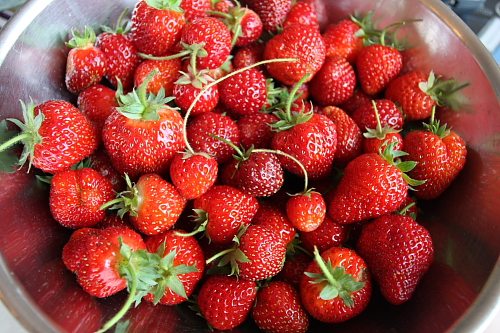 bowl-of-freshly-picked-strawberries
