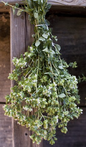 oregano-drying