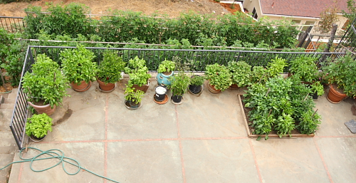 right-side-of-my-garden