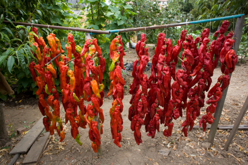 Ristras of peppers