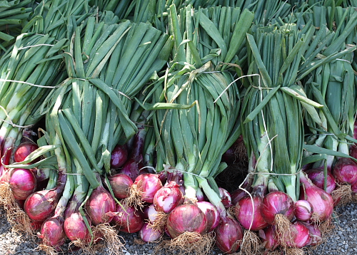 Fresh red onions of Tropea