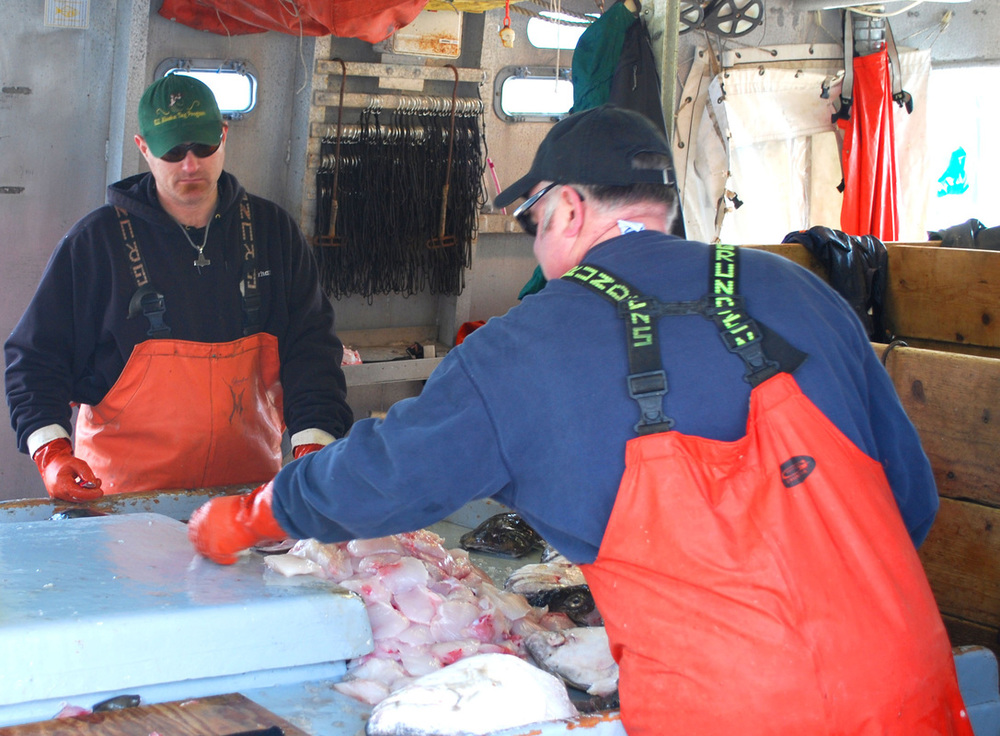 Cutting halibut cheeks ej.jpg