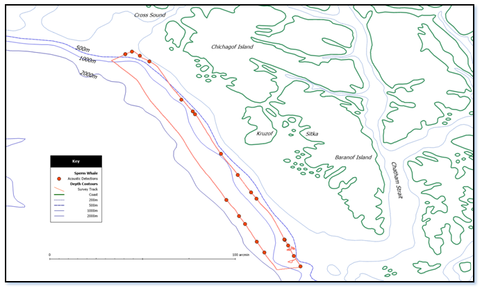 Tracks and vessel locations when sperm whales were detected acoustically during SEASWAP's towed array cruise on June 17th-19th offshore of Sitka, AK. The cruise approximately followed the 200fm contour and the 1000fm contour. The erratic lines in the south eastern section of the track indicates an interruption of the survey when sperm whales were encountered near a fishing vessel and a RHIB was deployed to collect tissue samples and photographic identifications.  There were 16 separate encounters with an estimated 20 individuals detected on the 200fm track and 5 encounters all with single animals on the ~1000fm track.