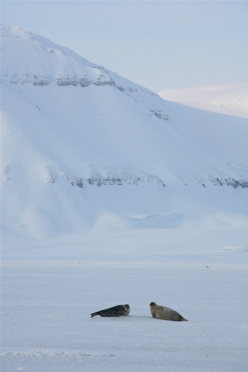 Svalbard. Foto: Odd Roar Lange