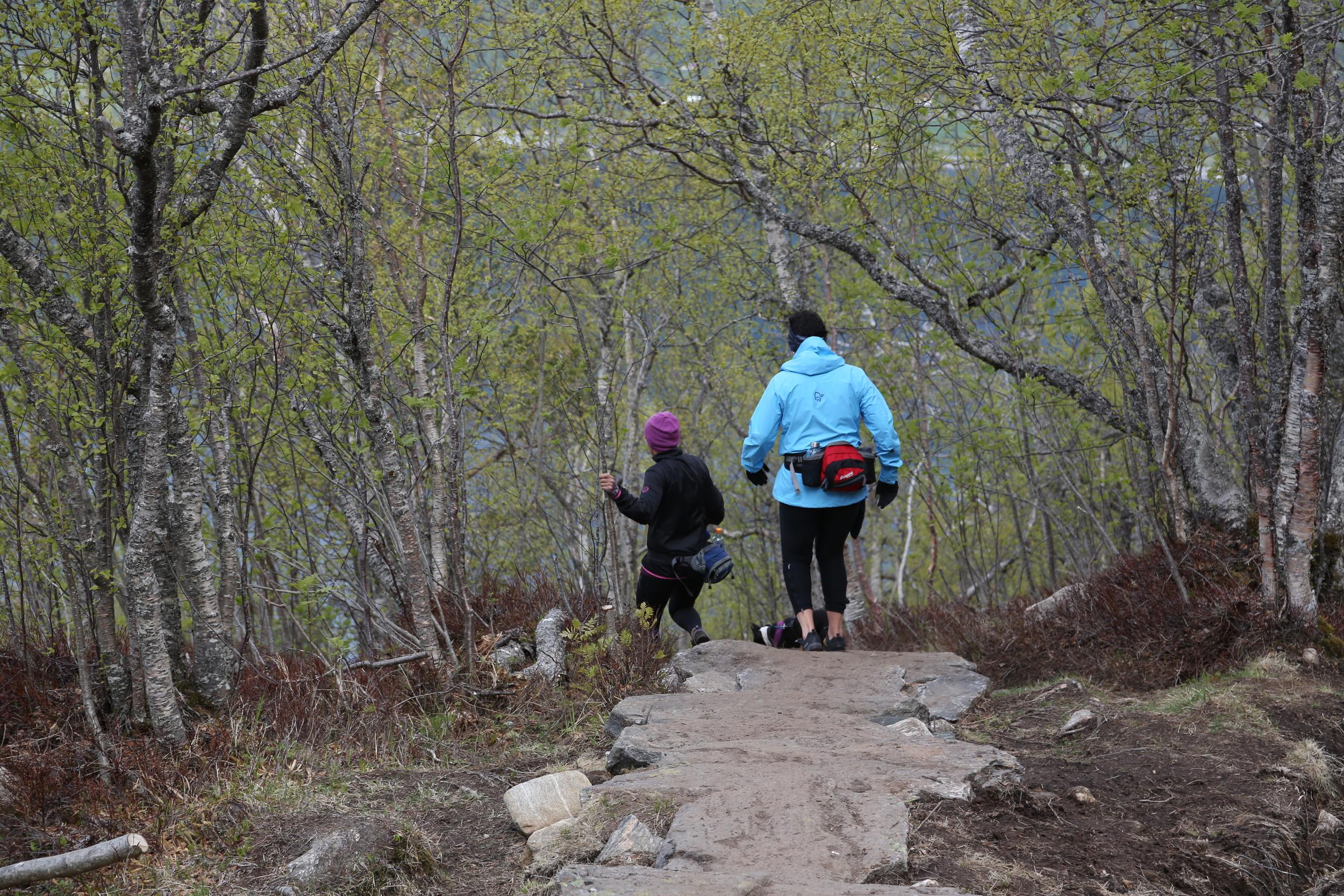 På vei rett inn i skogen og vekk fra utsikten. Foto: Odd Roar Lange