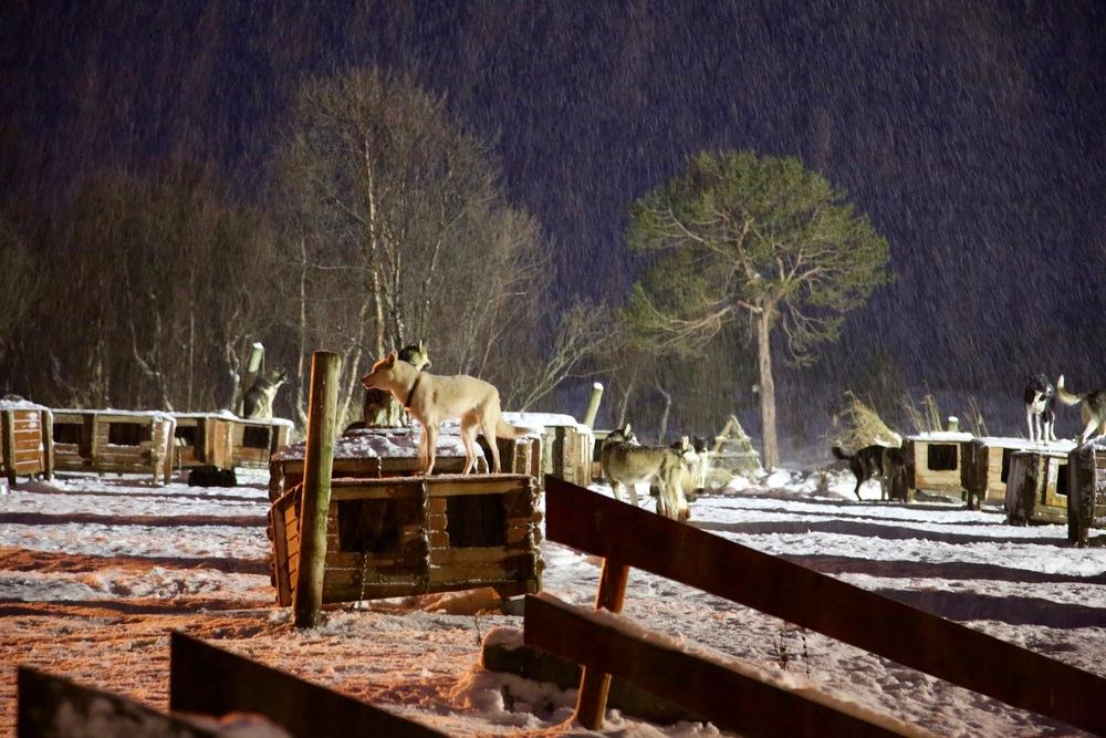 Været er ikke det beste, men skaper allikevel god vinterstemning. Foto: Odd Roar Lange