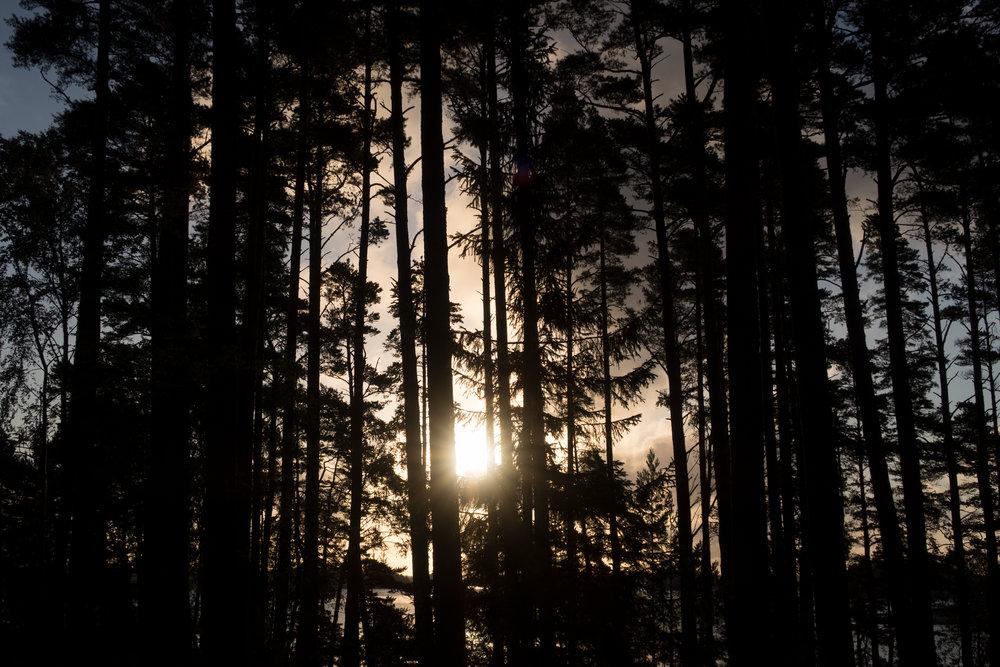 supersheisland_nature_007.jpg