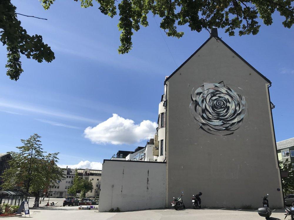 Rosen på veggen. Foto: Odd Roar Lange