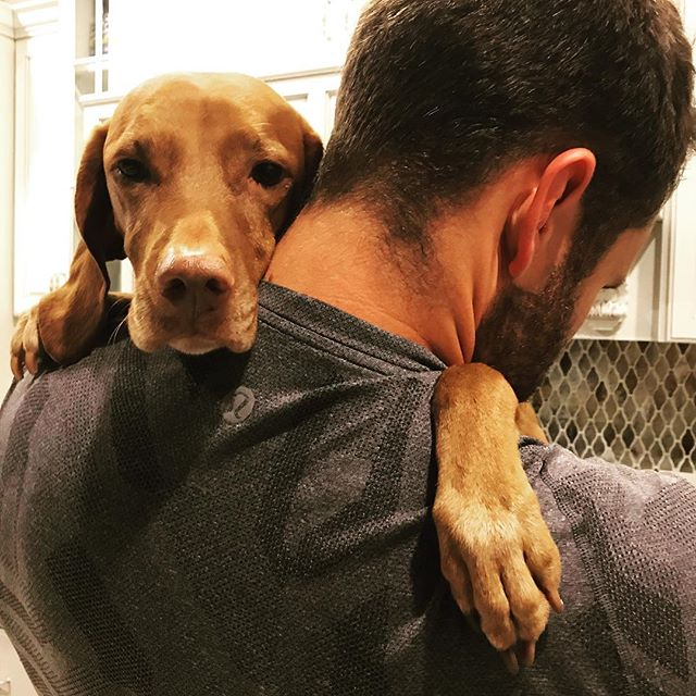 This is my lil sweet potato, Milly . . . .  #vizsla #ineedahaircut #furchild #dog #dogsofinstagram #velcrodog #mansbestfriend #cuddles