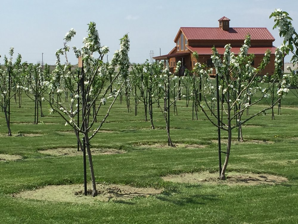 Planting the orchard -