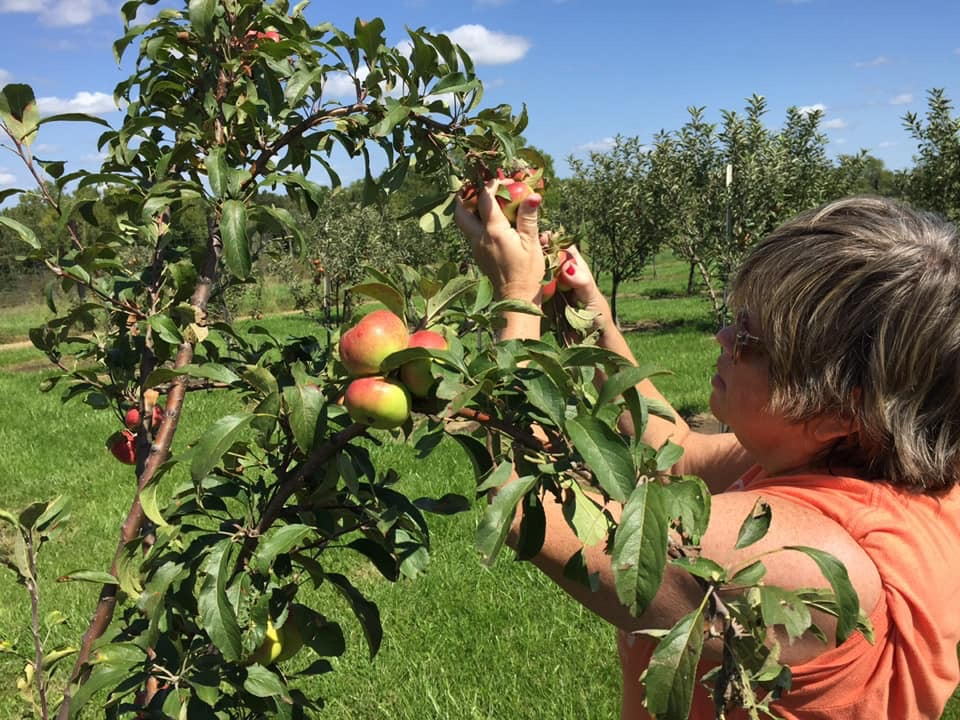 orchard picking apples.JPG
