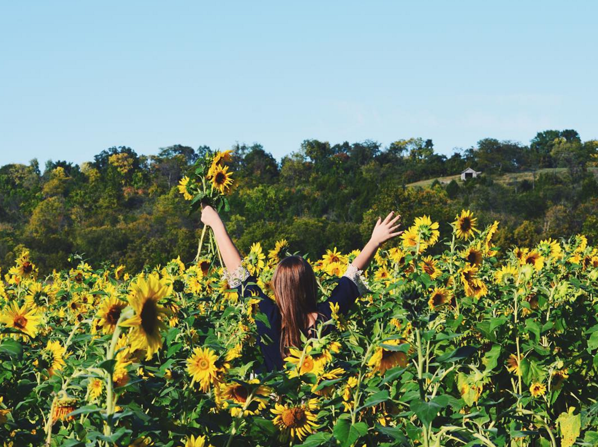5 Spots To Find Sunflowers In Ohio Ohio Explored
