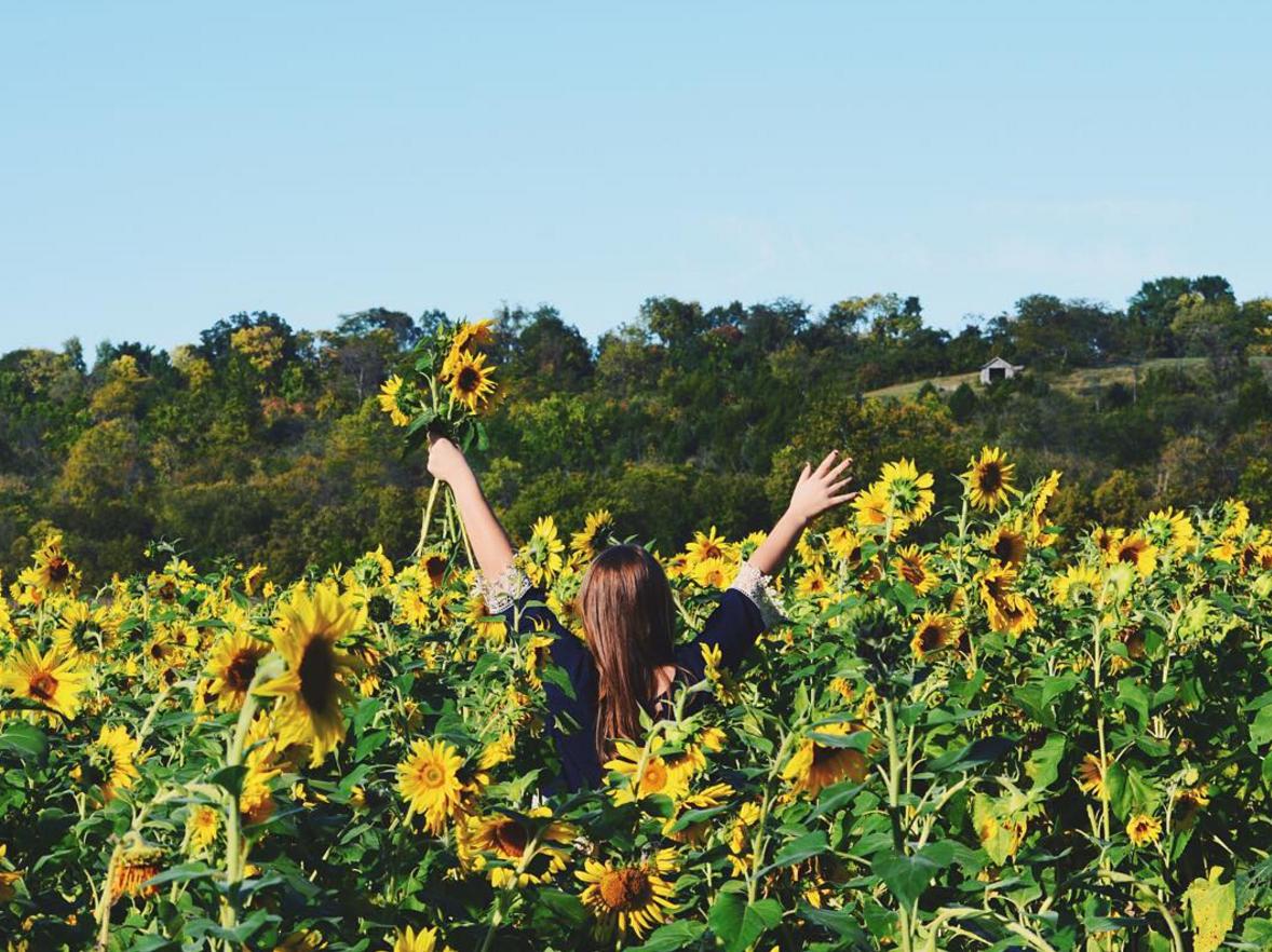 5 Spots To Find Sunflowers In Ohio Ohio Explored
