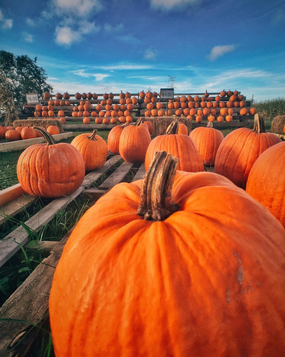 Photo by @amweills at Fleitz Pumpkin Farm in Oregon, Ohio