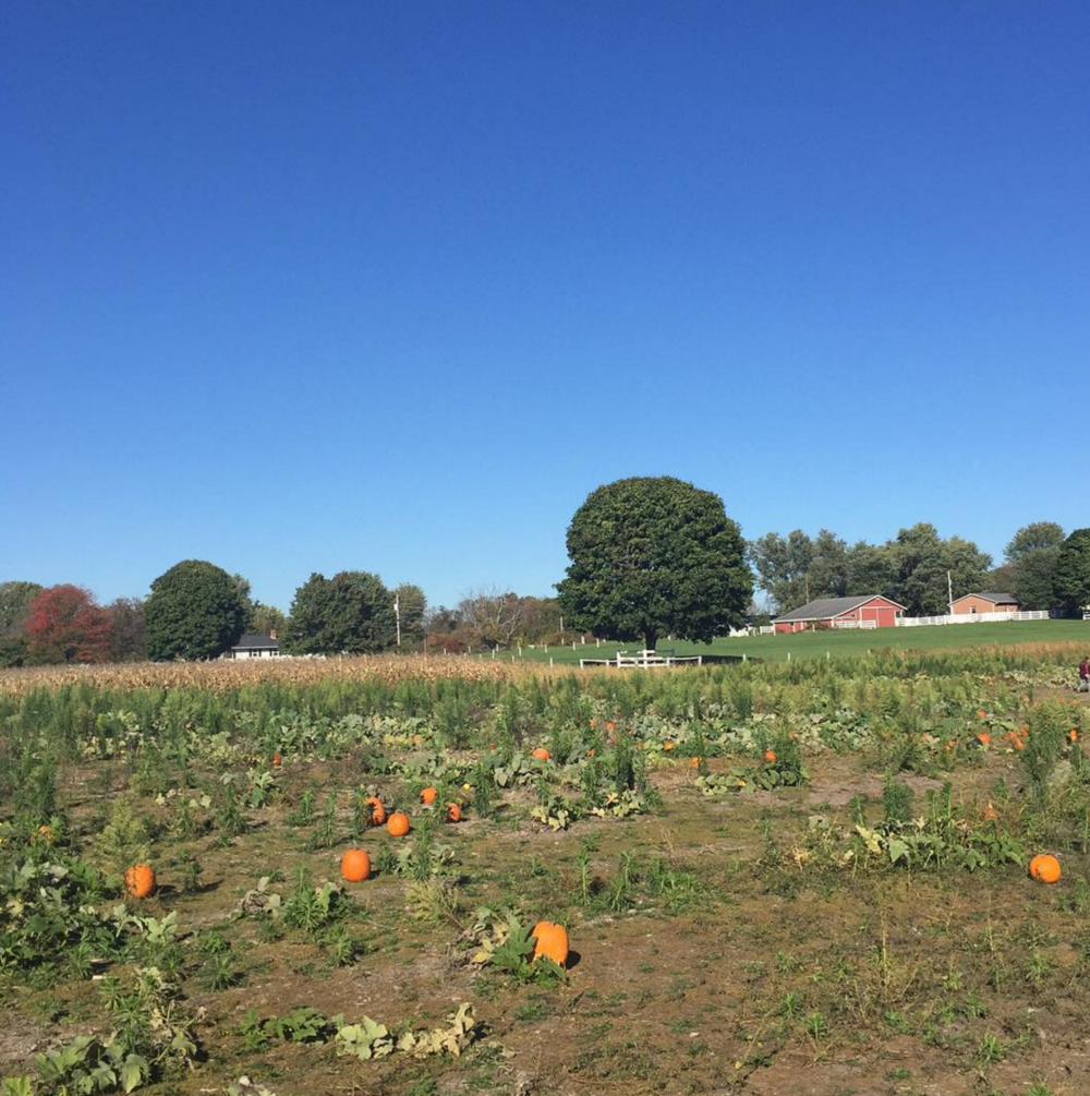 Photo by @samantha10780 at Kingsway Pumpkin Farm in Hartville, Ohio
