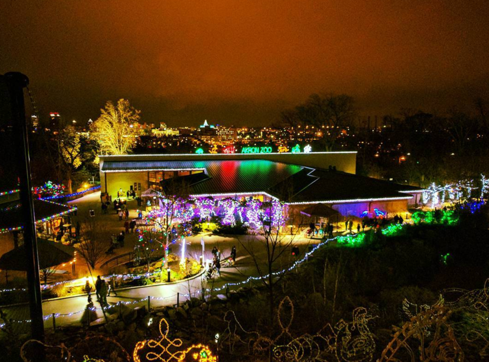 Photo by @batlars at Wild Lights at The Akron Zoo - Akron, Ohio