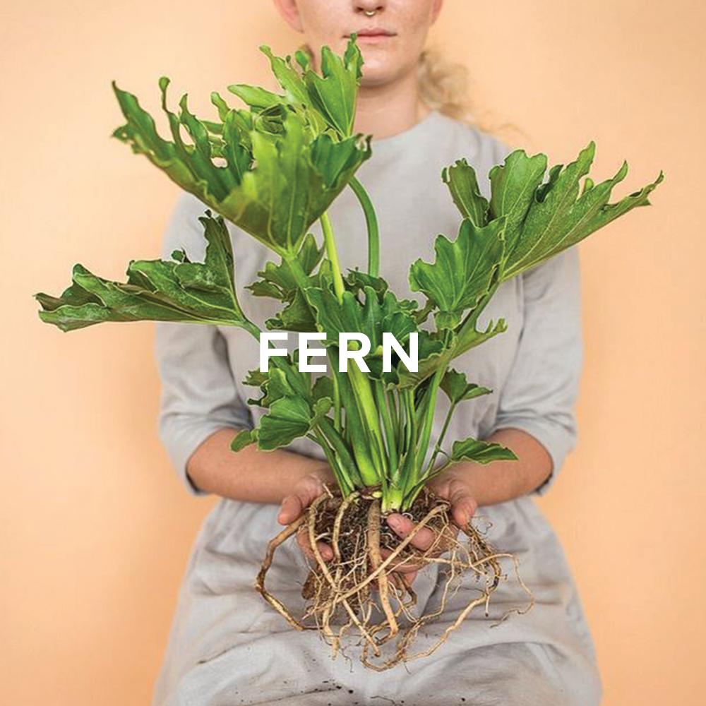 Fern Shop