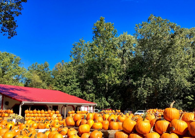 Cleveland Ohio Pumpkins