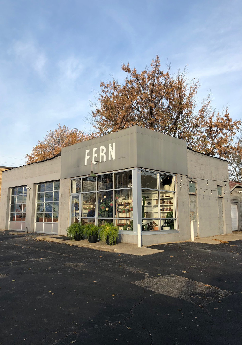 Fern Shop Cincinnati