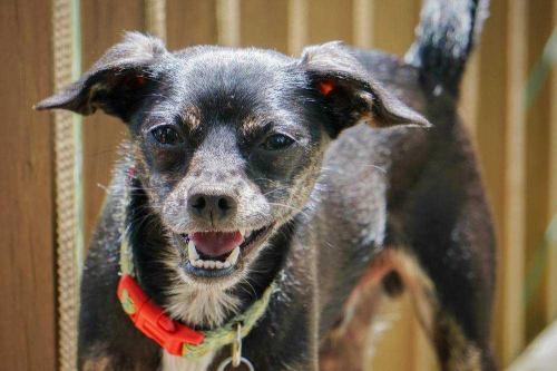 Mervin Adoptable Dog Ohio
