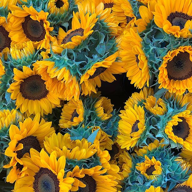 Here's to a sunny week! • • • The Universe sure does have a mysterious way of giving you what you need when you need it, even if it's not what you want. And when that mystery is surrendered to, isn't it beautiful? • • • #🌻