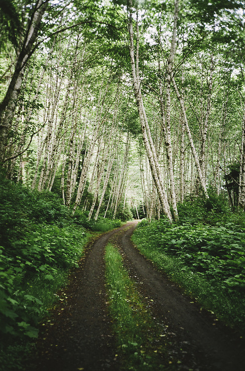 forestroad.jpg
