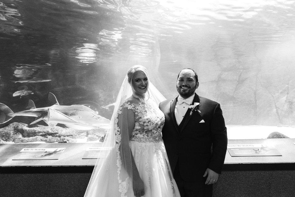 Newport Aquarium Wedding Destination Wedding Photographers Cincinnati-20.jpg