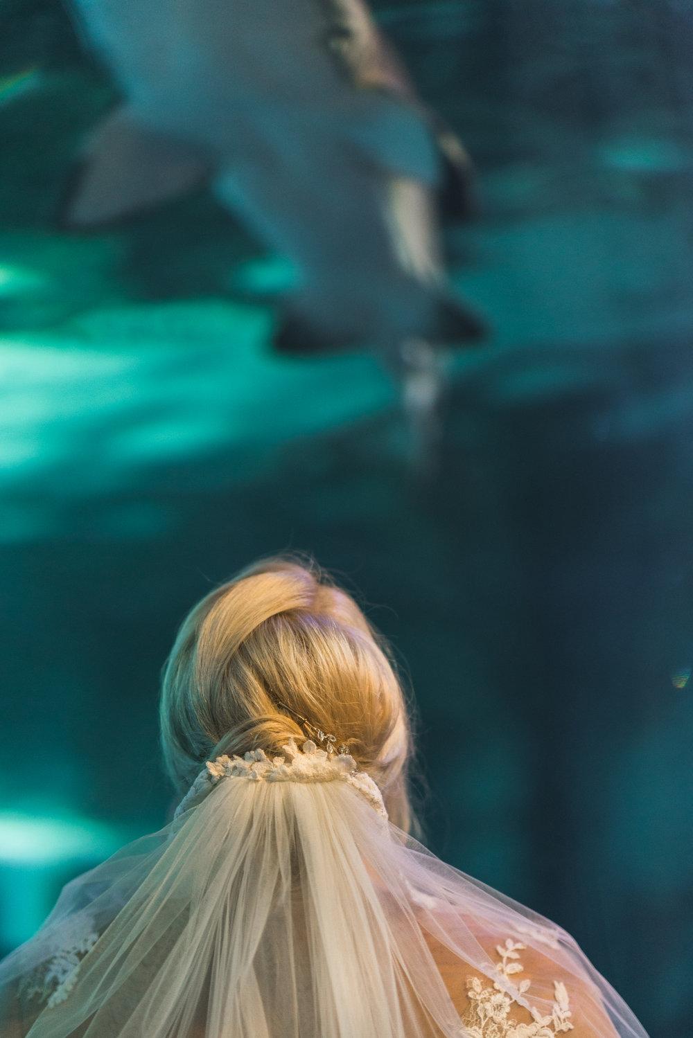 Newport Aquarium Wedding Destination Wedding Photographers Cincinnati-21.jpg