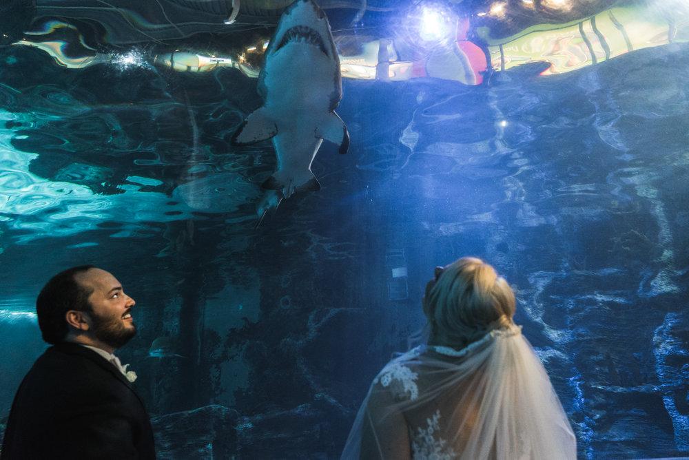 Newport Aquarium Wedding Destination Wedding Photographers Cincinnati-22.jpg
