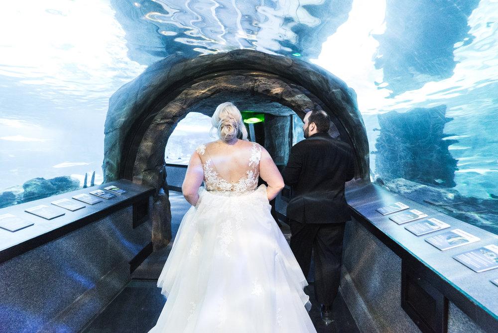 Newport Aquarium Wedding Destination Wedding Photographers Cincinnati-24.jpg