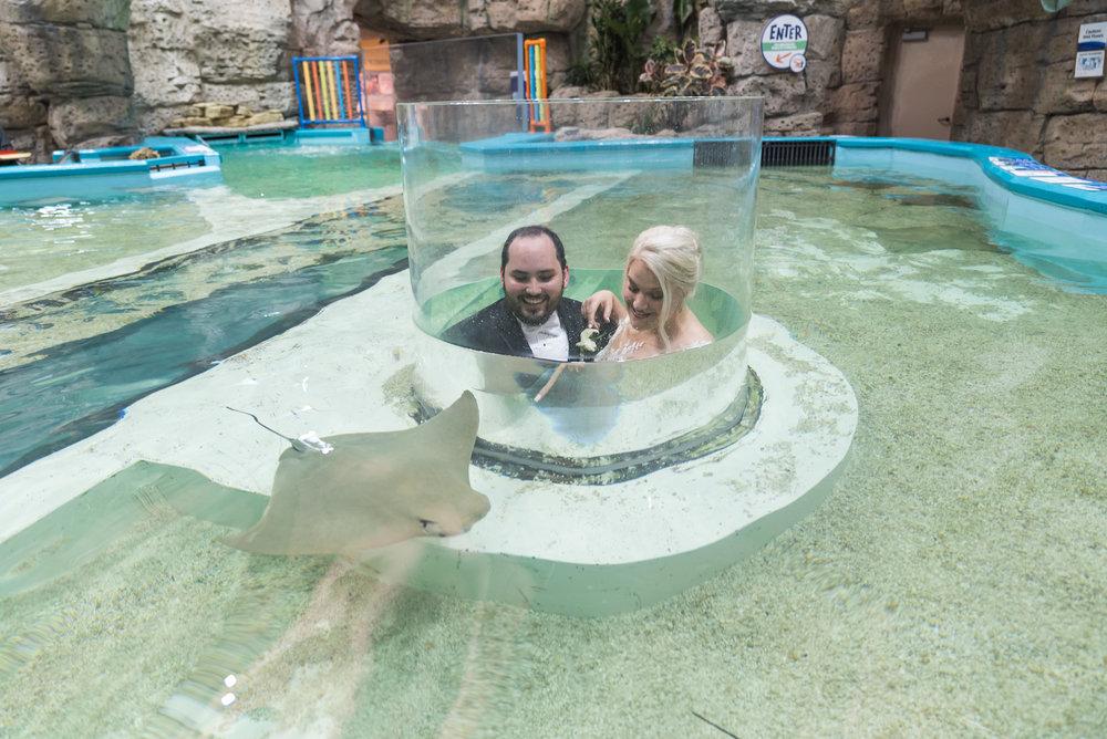 Newport Aquarium Wedding Destination Wedding Photographers Cincinnati-34.jpg