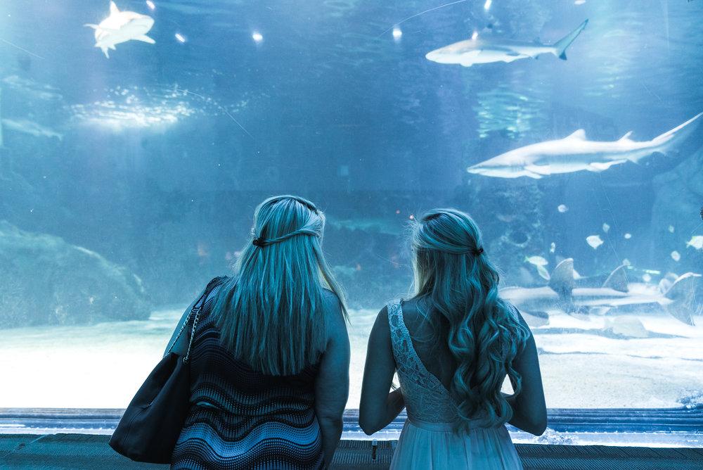Newport Aquarium Wedding Destination Wedding Photographers Cincinnati-38.jpg