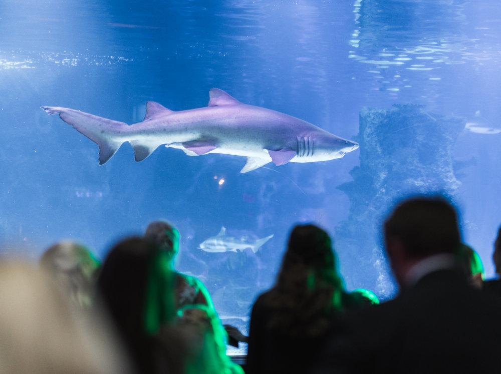 Newport Aquarium Wedding Destination Wedding Photographers Cincinnati-46.jpg