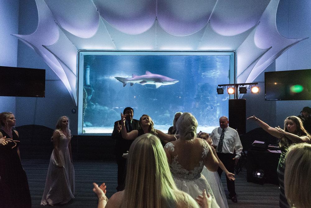 Newport Aquarium Wedding Destination Wedding Photographers Cincinnati-48.jpg