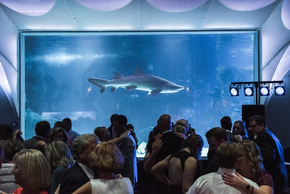 Newport Aquarium Wedding Destination Wedding Photographers Cincinnati-50.jpg