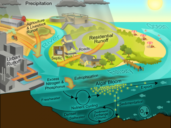 The Phosphorus cycle with human impacts. Image Credit:  Hans W. Paerl 2006 .