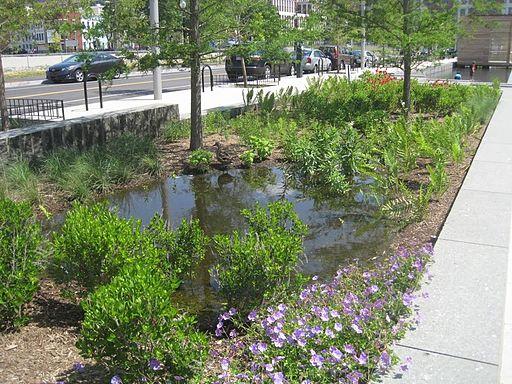 Rain garden. Image Credit: US EPA via  WikiMedia Commons , Public Domain.