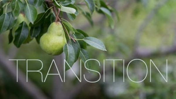 Transition Farm - Palate Movie