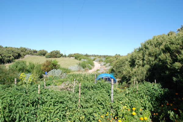 January 2012 - Tomatoes, Corn, Indigenous Vegetation, Fruit & Nut Trees, and rejuvenated pasture with perennial rye grass, clover, lucerne and brassicas.