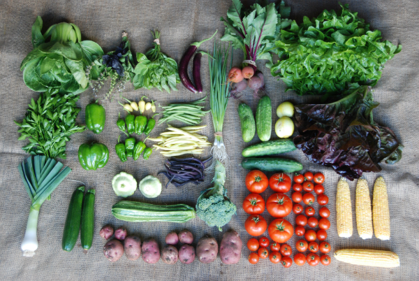 Summer Share Trial Week #5 - Half Share Box (2 people) February 2012