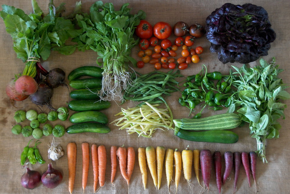 A randomly selected CSA share from Week #10 of our Summer Share