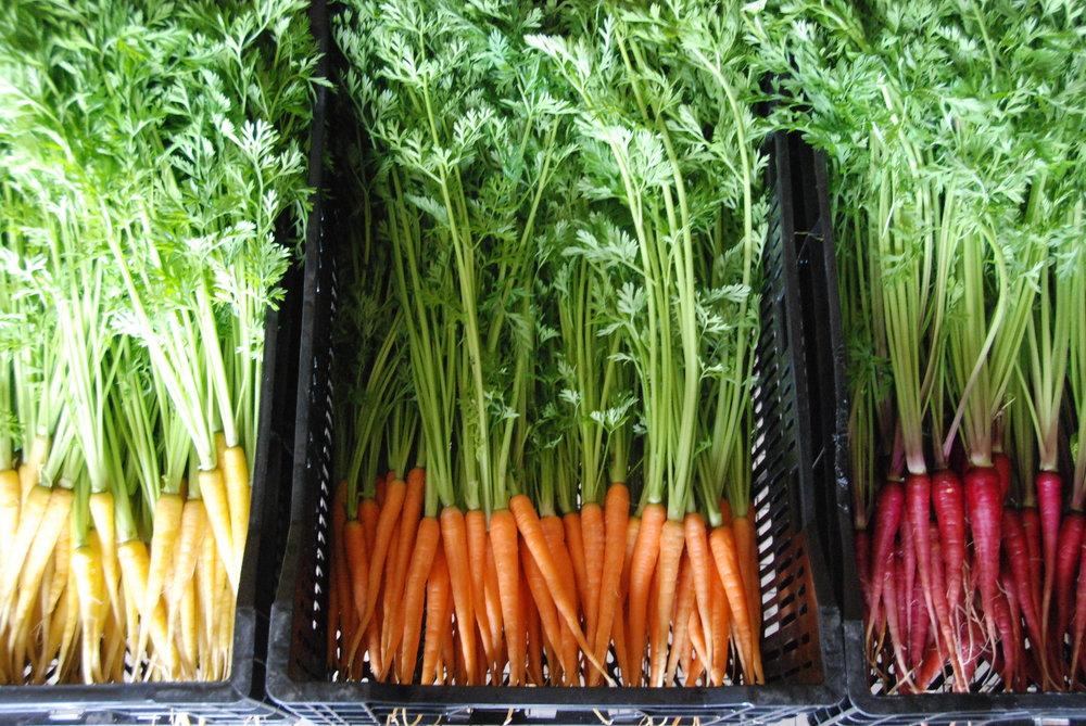 Heirloom Carrots.JPG
