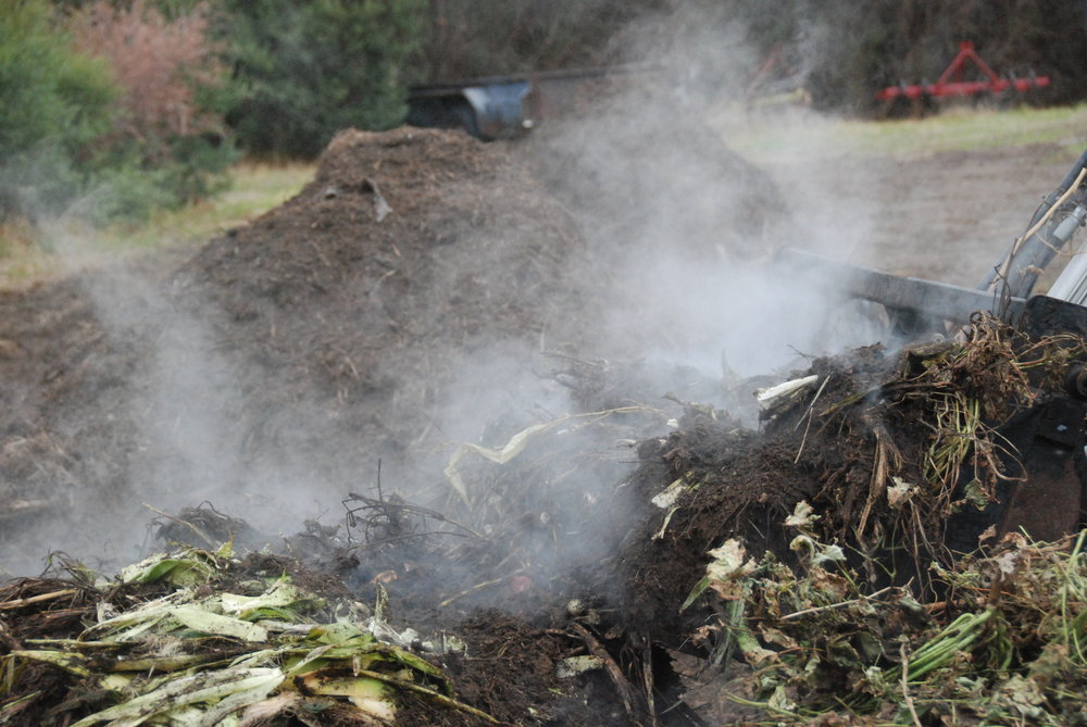 The compost piles steaming as Peter turns them. Autumn is our main season for building compost piles as the earth is still warm and the moisture levels in the piles is easier to maintain.