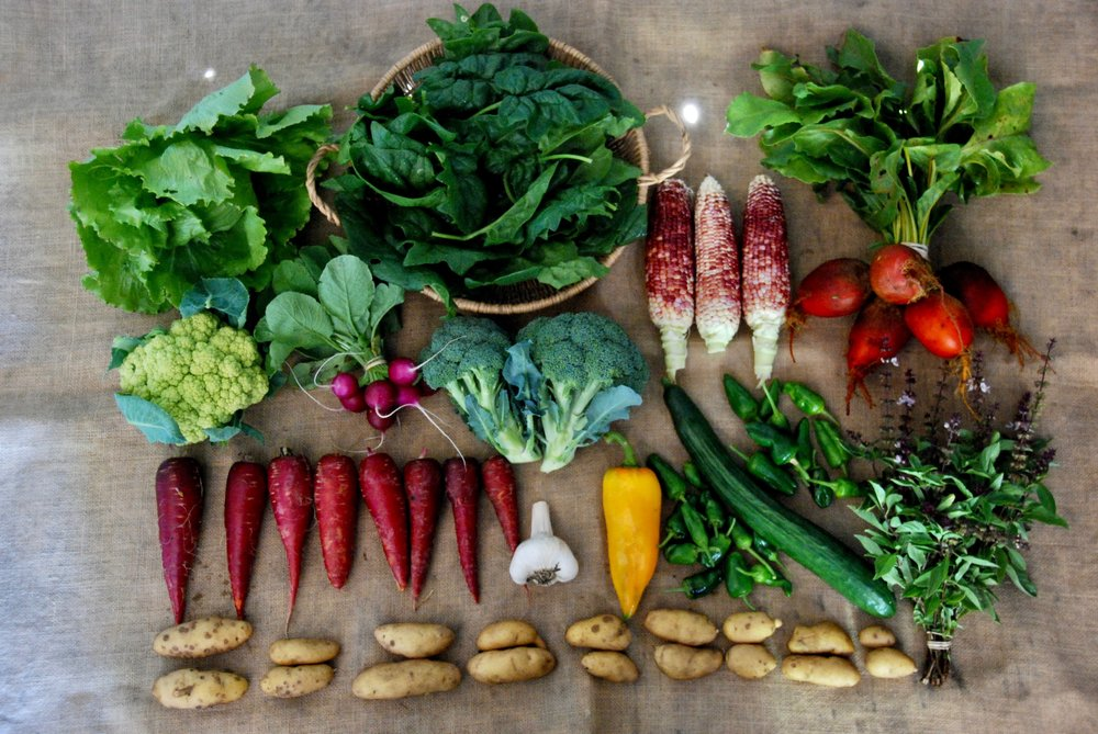 A randomly selected CSA box from week 20 of our CSA season - week 3 of our late Summer/Early Autumn share.