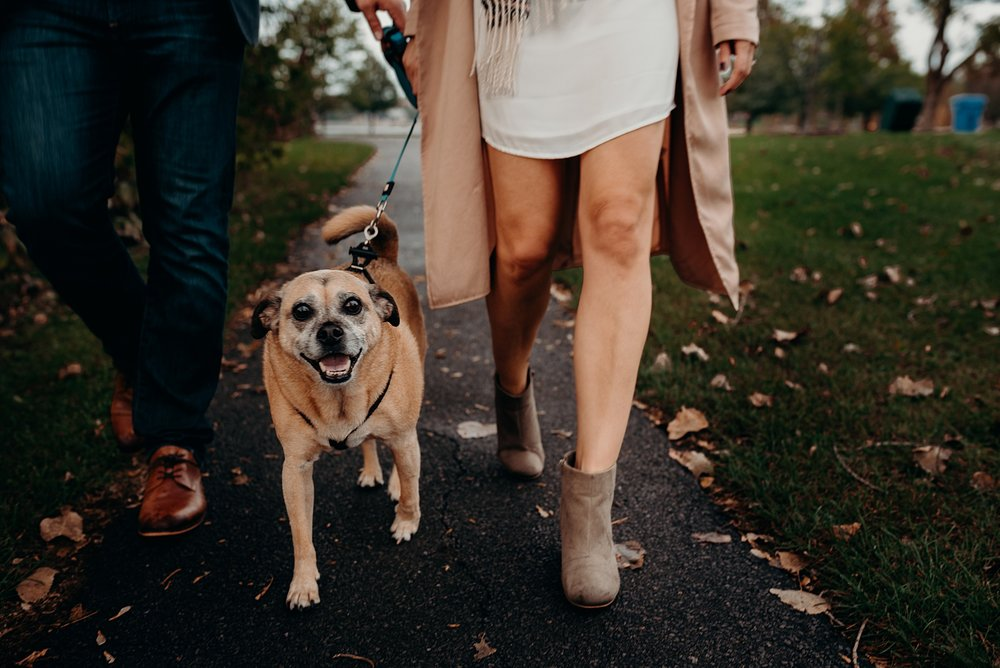 Bringing your Dog or Cat to an engagement session. Mocha Tree Studios Ottawa Toronto Montreal Wedding and Engagement Photographer and Videographer Dark Moody Intimate Authentic Modern Romantic Cinematic Best Candid 11